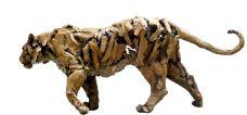 Gambino - tigre